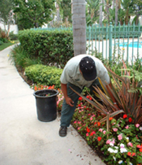 Los Angeles irrigation repair contractor checks drip lines for a flower bed